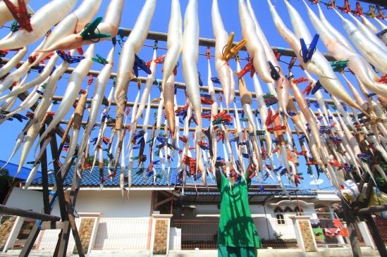 Pekerja menjemur perut ikan (hipyo) Remang di sentra olahan hasil laut daerah Pabean Udik, Kabupaten Indramayu, Jawa Barat, Selasa (16/6). Permintaan ekspor hipyo dari berbagai negara seperti Tiongkok, Korea dan Jepang meningkat hingga 40 persen dengan harga jual Rp2 juta hingga Rp3 juta per kilogram. ANTARA FOTO/Dedhez Anggara/kye/15.